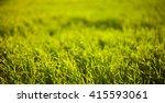 green grass sunny bokeh in the... | Shutterstock . vector #415593061