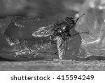a macro shot of fly in vintage... | Shutterstock . vector #415594249