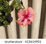 showy pink suffused with orange ... | Shutterstock . vector #415614901