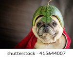 Stock photo pug wearing a watermelon helmet the pugs hero 415644007
