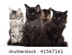 Group Of Beautiful Maine Coon...