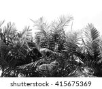 beautiful palms leaf on white... | Shutterstock . vector #415675369