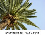 looking at a tall palm tree... | Shutterstock . vector #41595445