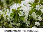 spring cherry blossom  white... | Shutterstock . vector #416082061