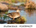 Birds   Animals In Wildlife....