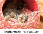 sleeping cat in cat bed | Shutterstock . vector #416108239