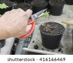 man planted a flower in a pot ... | Shutterstock . vector #416166469
