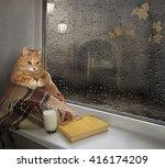 A Cat Sits On The Windowsill....