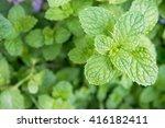 background green kitchen mint   Shutterstock . vector #416182411