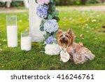 dog in dress near the wedding... | Shutterstock . vector #416246761