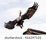 pelican in flight   Shutterstock . vector #416297131