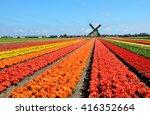 Small photo of Dutch windmill and colorful tulips flowers in Holland, Netherlands