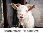 funny goat with close mouth a... | Shutterstock . vector #416381995