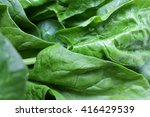 Fresh Spinach Leaves