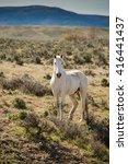 Wild White Horse Running Free...