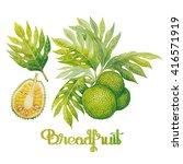 Watercolor Breadfruit Set. Han...