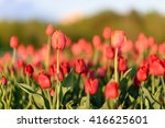 natural flowers background.... | Shutterstock . vector #416625601