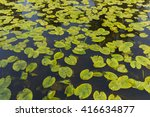 Water Lily Texture Wallpaper...