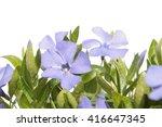 periwinkle  vinca  flower... | Shutterstock . vector #416647345
