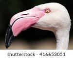 Greater Flamingo Head Details...
