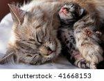 Stock photo cat and kitten hugs 41668153