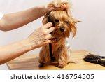 grooming for york | Shutterstock . vector #416754505