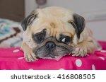 Close Up Face Of Cute Dog Pug...