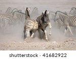 two zebra s fighting amongst... | Shutterstock . vector #41682922