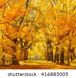 woods and autumn foliage in... | Shutterstock . vector #416885005