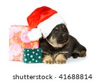 sheepdog puppy with christmas... | Shutterstock . vector #41688814