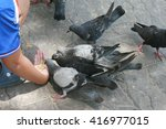 Child Giving Food To Pigeons
