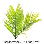 green palm leaves isolated on... | Shutterstock . vector #417058291