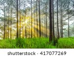 Sun Rays In Pine Forest With...