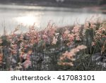 background tiny flower evening. | Shutterstock . vector #417083101