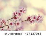 almond flowers | Shutterstock . vector #417137065