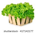 fresh organic green lettuce in... | Shutterstock . vector #417142177