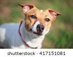 portrait of little jack russell ... | Shutterstock . vector #417151081