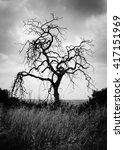 a dead tree stands alone under...   Shutterstock . vector #417151969