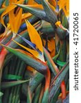 sterlizia  exotic tropical...   Shutterstock . vector #41720065