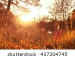 Gold Autumn With Sunlight....