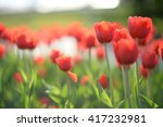 amazing nature of red tulips... | Shutterstock . vector #417232981