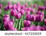 amazing nature of purple tulips ... | Shutterstock . vector #417233029