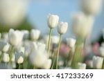 Nice Flower Background. Closeu...