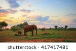 elephant family moving around... | Shutterstock . vector #417417481