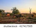 Rhino Herd Moving Around At...