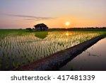 Beautiful View Of Rice Paddy...