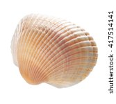 Sea Shell Isolated On White...