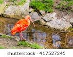 Red Ibis Bird With Long Beak O...