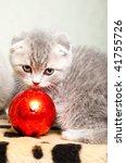 scottish fold kitten  playing...   Shutterstock . vector #41755726