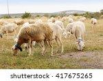 flock of sheep on green grass | Shutterstock . vector #417675265